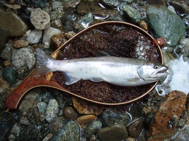 fishing-neta